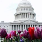 The Chronic Advocate: Getting Started in Legislative Advocacy